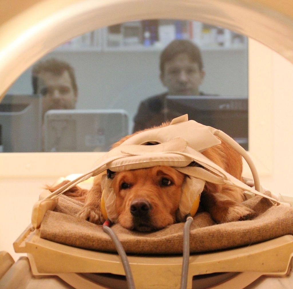 Магнитно-резонансная терапия является эффективным исследованием при различных заболеваниях