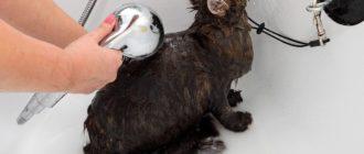 Как часто купать кота