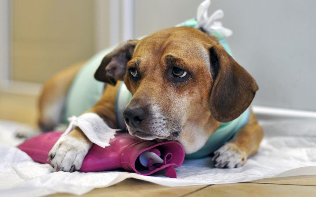 Обезболивающие препараты при болях в спине и суставах для собак