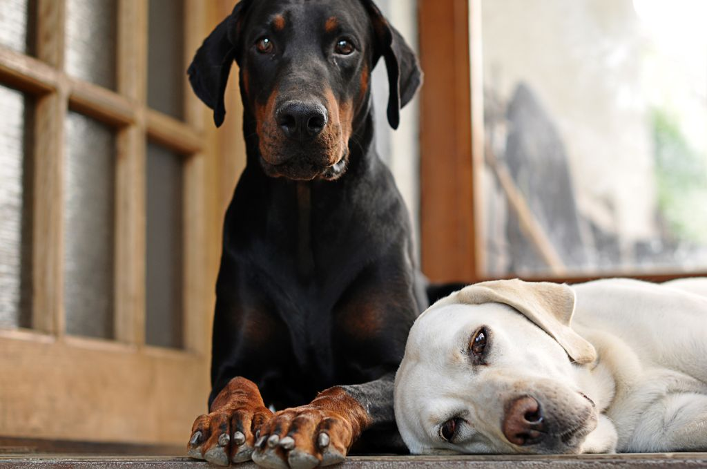 Если дома находится больше одного животного, обрабатывать их всех следует одновременно