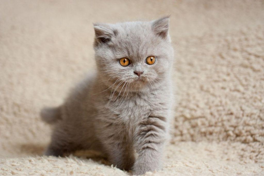 Котятам можно давать четверть таблетки с месячного возраста