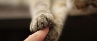 Что делать если умер кот