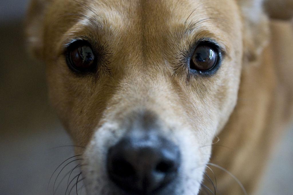 Болезни глаз у собаки