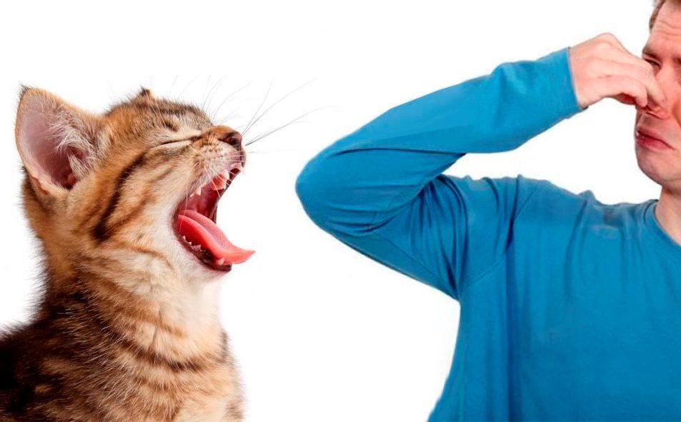 Если проблема запаха является постоянной, а не возникает время от времени, то котенка необходимо комплексно обследовать