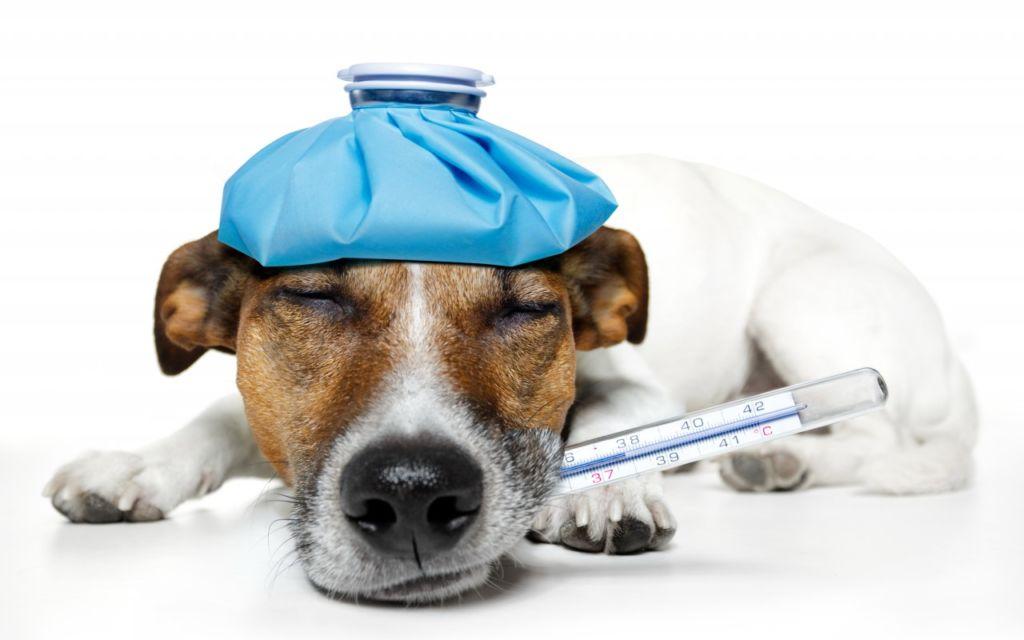 Симптомы цистита у собак и лечение антибиотиками в домашних условиях