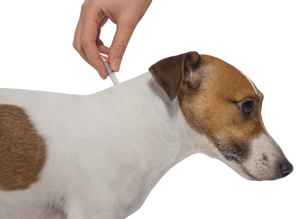 Инструкция по применению капель от блох для собак адвантикс