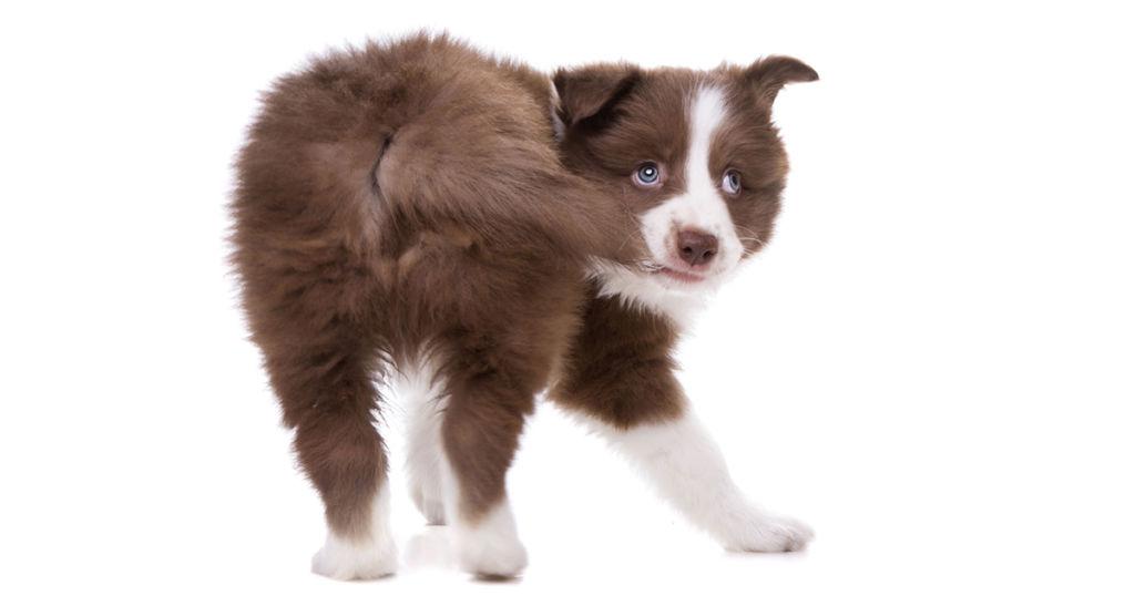 3 причины, почему собака бегает за своим хвостом и кусает его