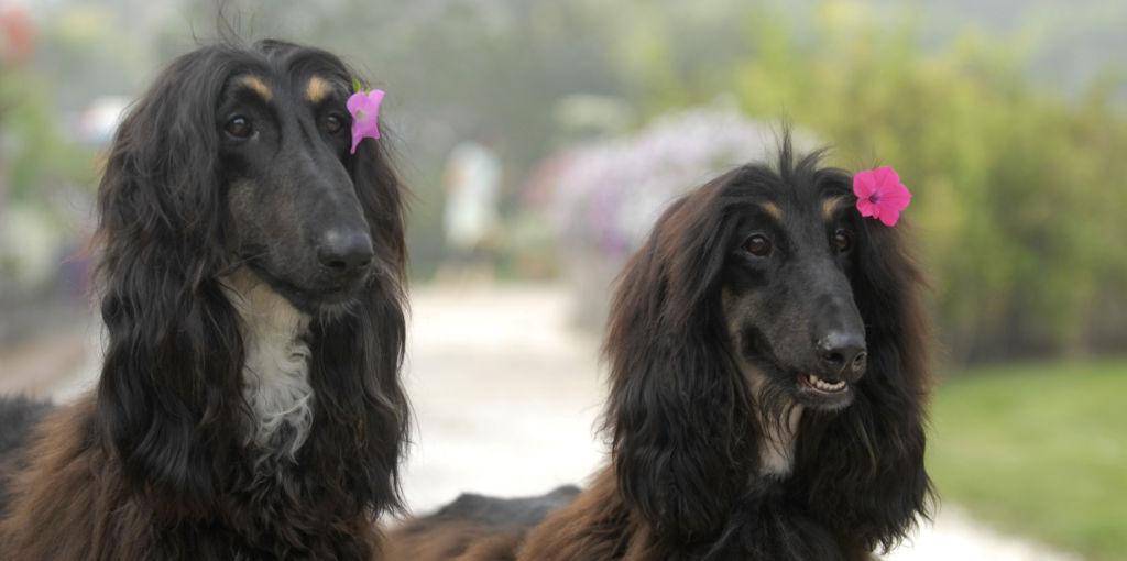 Собаки имеют множество породных заболеваний