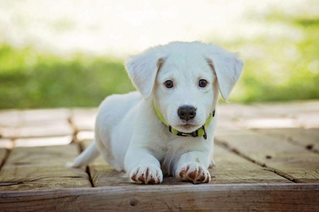 Сколько гулять со щенком