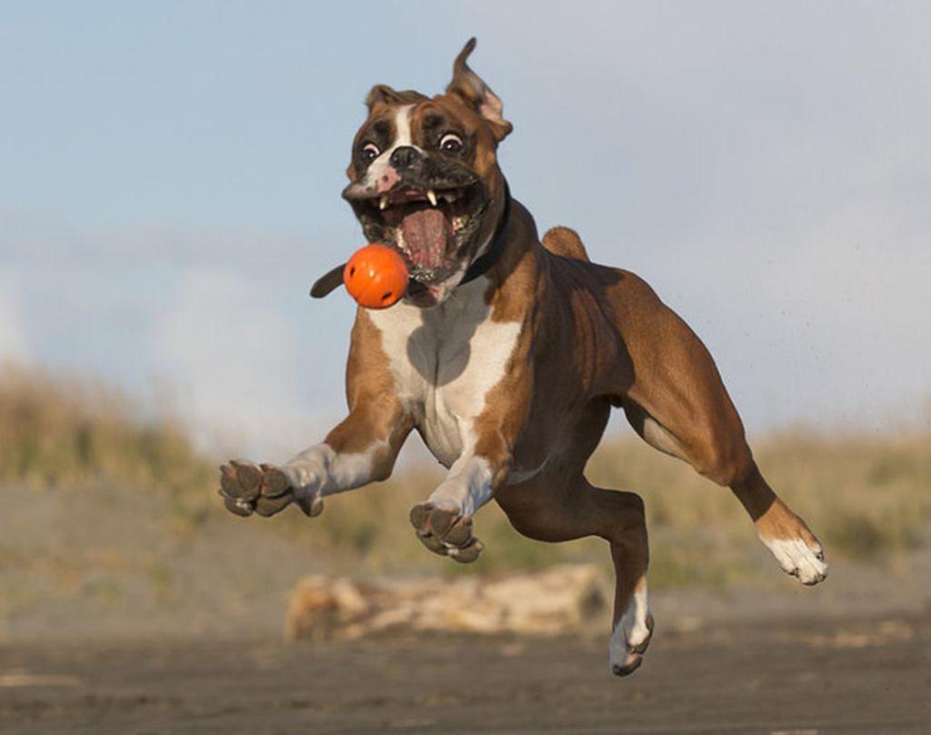 Дрессировка может доставить радость не только собаке, но и ее хозяину