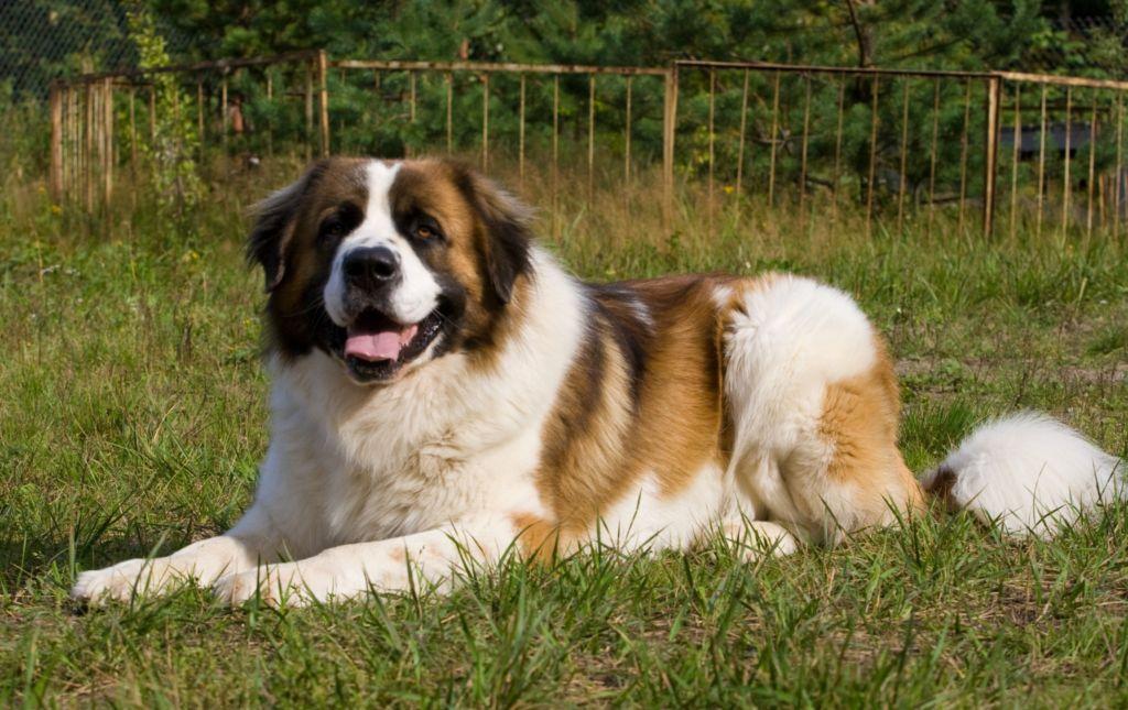 Симптомы и правильное лечение рахита у собак