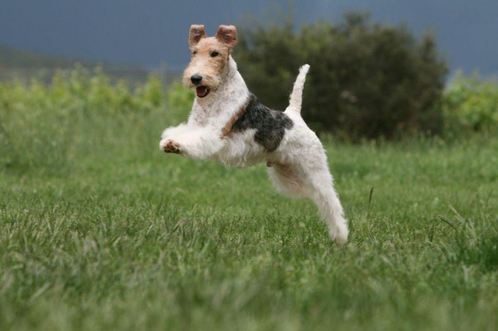 Если собака не получит должной прогулки и физических нагрузок, то начнет грызть диван и рыть кратеры на огородах