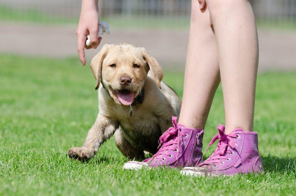 Как отучить щенка кусаться и хватать за ноги и руки