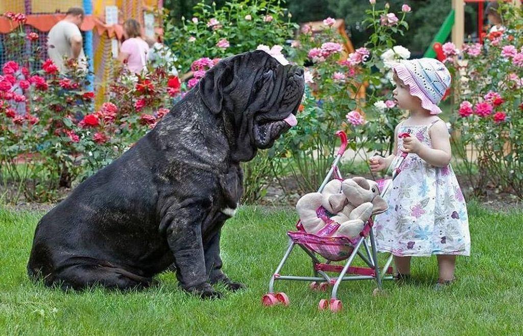 За здоровьем пса нужно следить очень тщательно