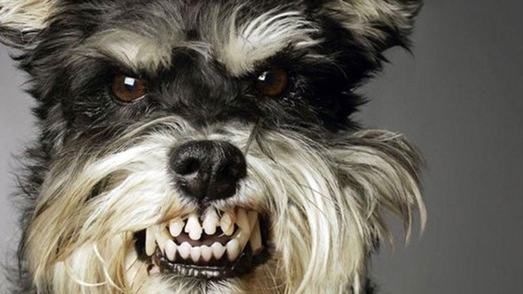 Собака или щенок рычит на хозяина: почему и что делать ...