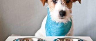 Как правильно перевести собаку с натурального на сухой корм и наоборот