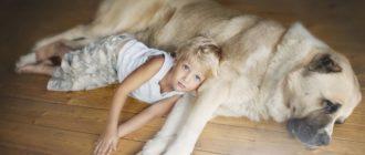 Собаки для семей с детьми