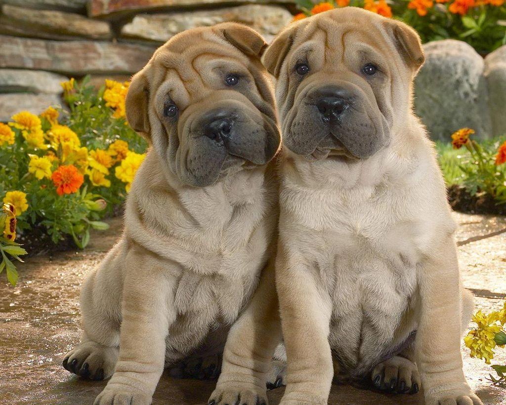 Картинки собак со всего мира