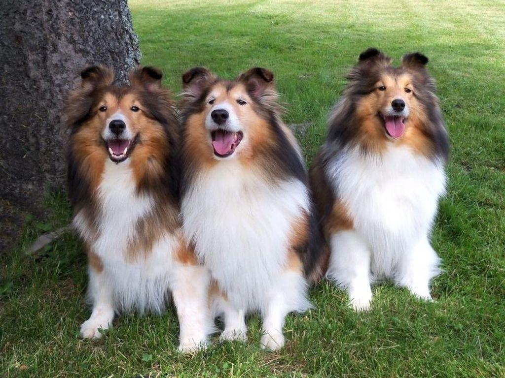 собаки средних размеров породы название