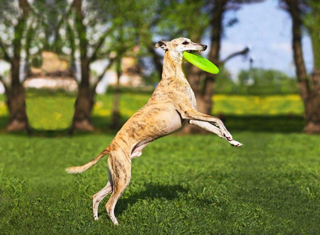 Собаки отличаются умом и послушанием