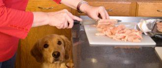 Натуральный корм собак и правильные рецепты сбалансированного питания