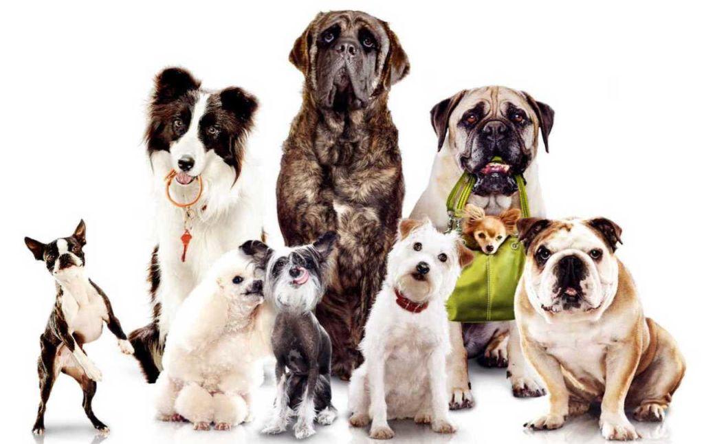 Что лучше для собак Роял Канин или Проплан