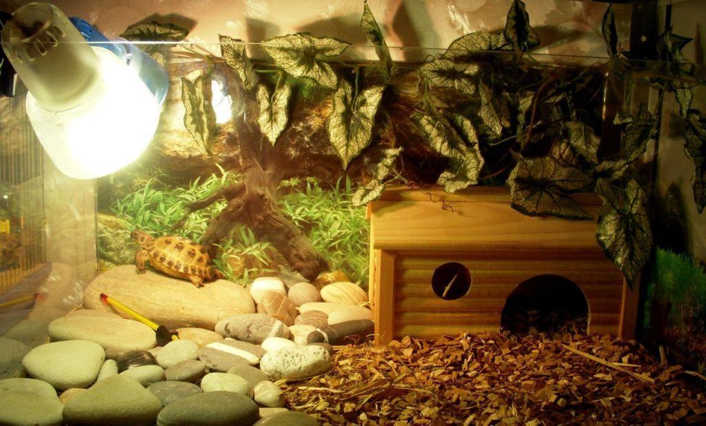 Террариум для черепах сухопутных
