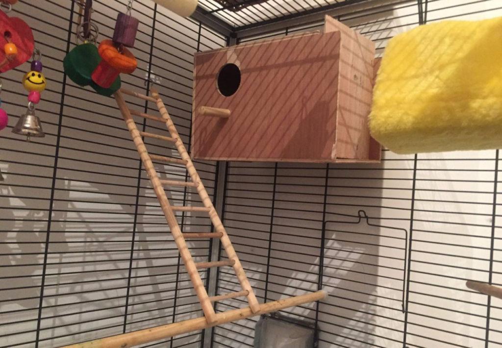 Клетка для содержания выставочных попугаев должна быть просторная, сделана из металлических прутьев