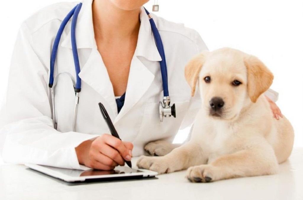 Верным решением является показать питомца ветеринару