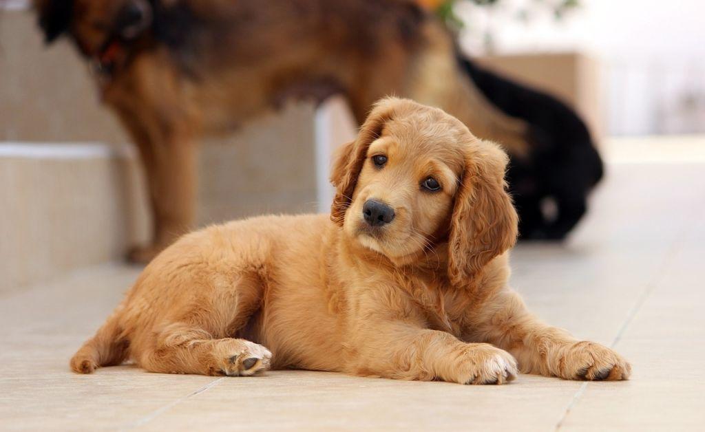 7 причин, почему у собаки отказывают задние ноги и как вылечить