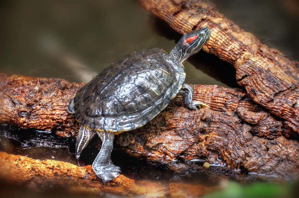 Профилактика ринитов и насморка достаточно проста: необходимо оберегать черепаху от сквозняков