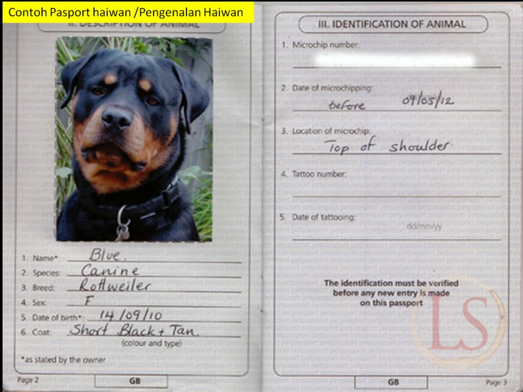 Что такое документы РКФ на собаку и как легко сделать родословную