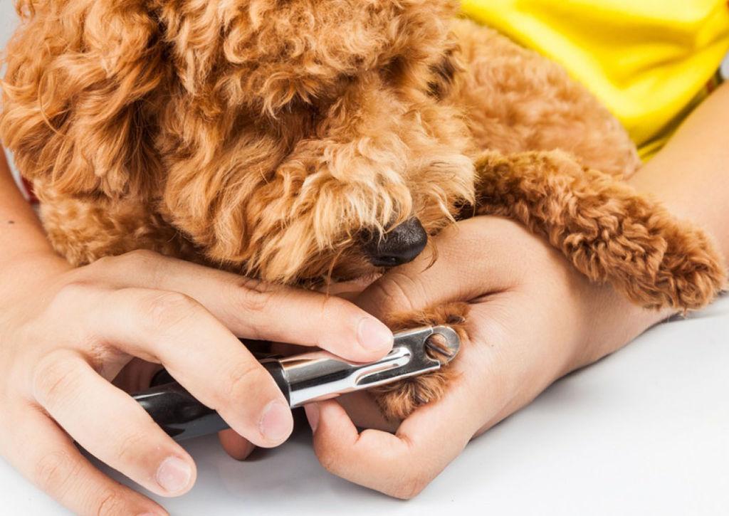 Подробная инструкция, как стричь когти собаке в домашних условиях
