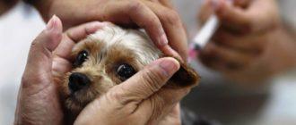 Основные прививки собакам по возрасту — таблица и график
