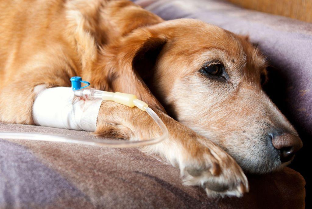 Когда и как правильно вызвать рвоту у собаки