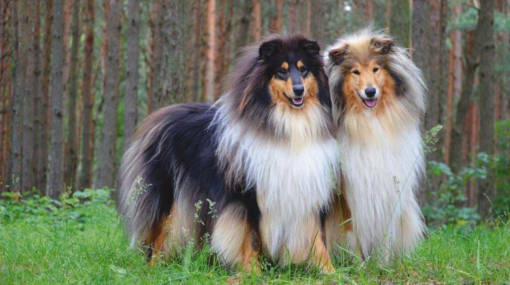 Порода служебных собак 7