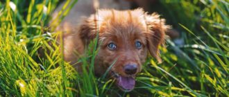 5 возможных причин, почему собака ест траву и что делать