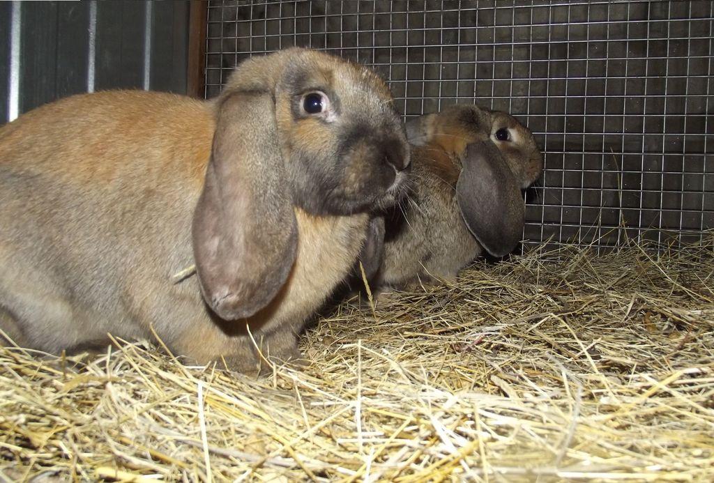 В своем домике кролик чувствует себя в безопасности, поэтому вынимать его оттуда не стоит