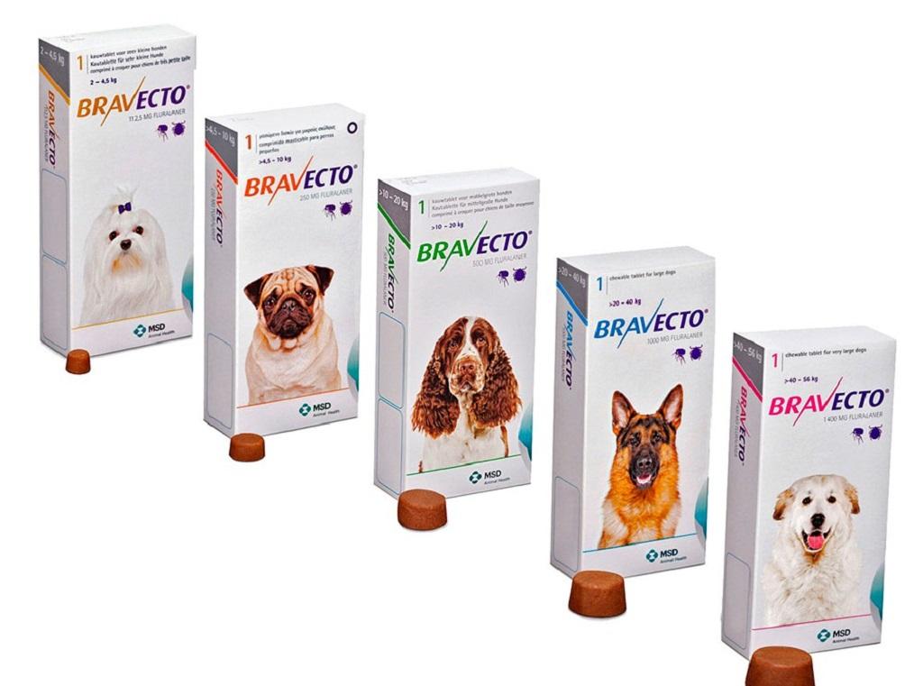 6 типов лучших средств от блох для собак