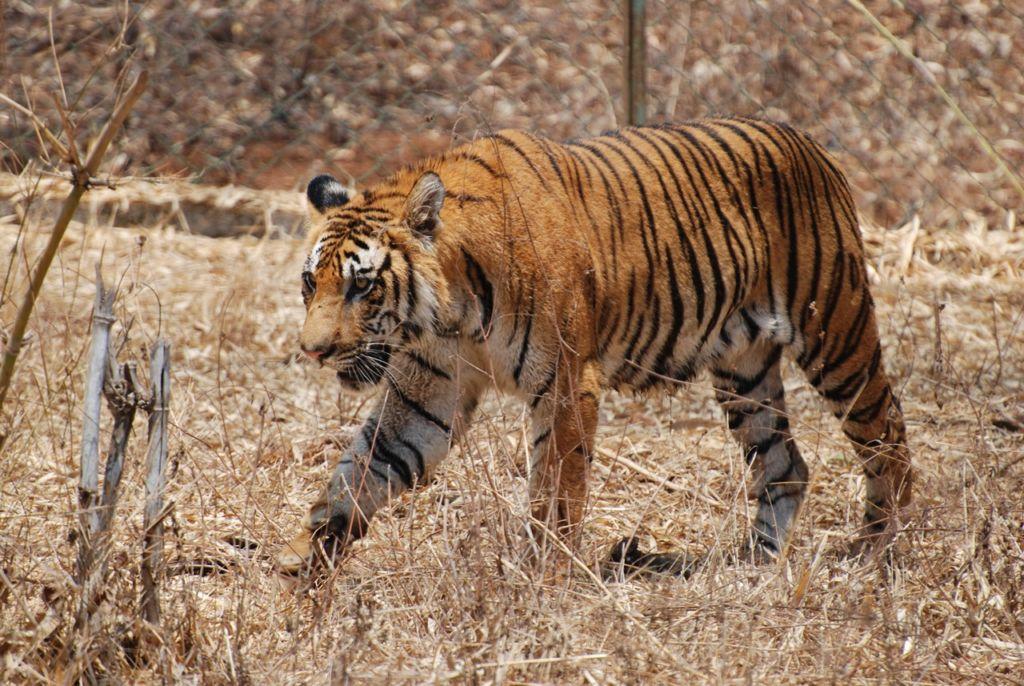 Это животное считается самым мудрым, смелым, сильным и опасным