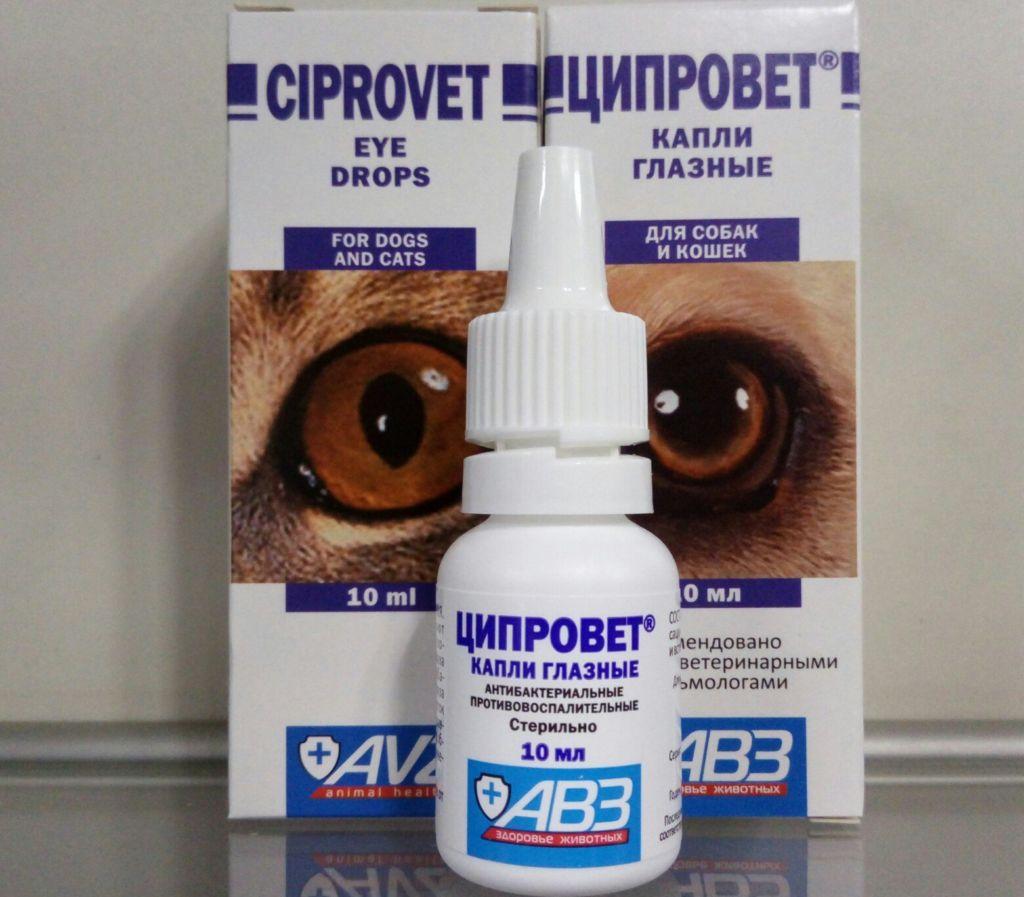 У хомяка воспалился глаз и гноится — что делать и как лечить