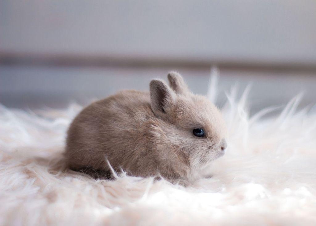 Хороший крольчонок – средней упитанности, не вялый, не сонливый