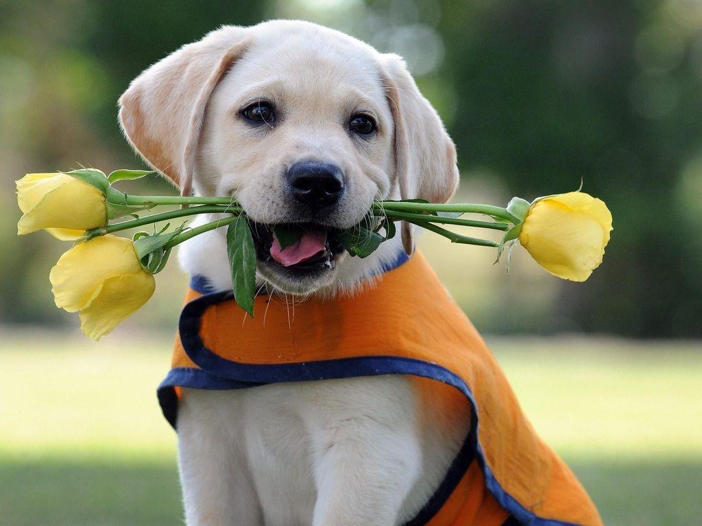 картинка собачка с цветком в зубах курортов