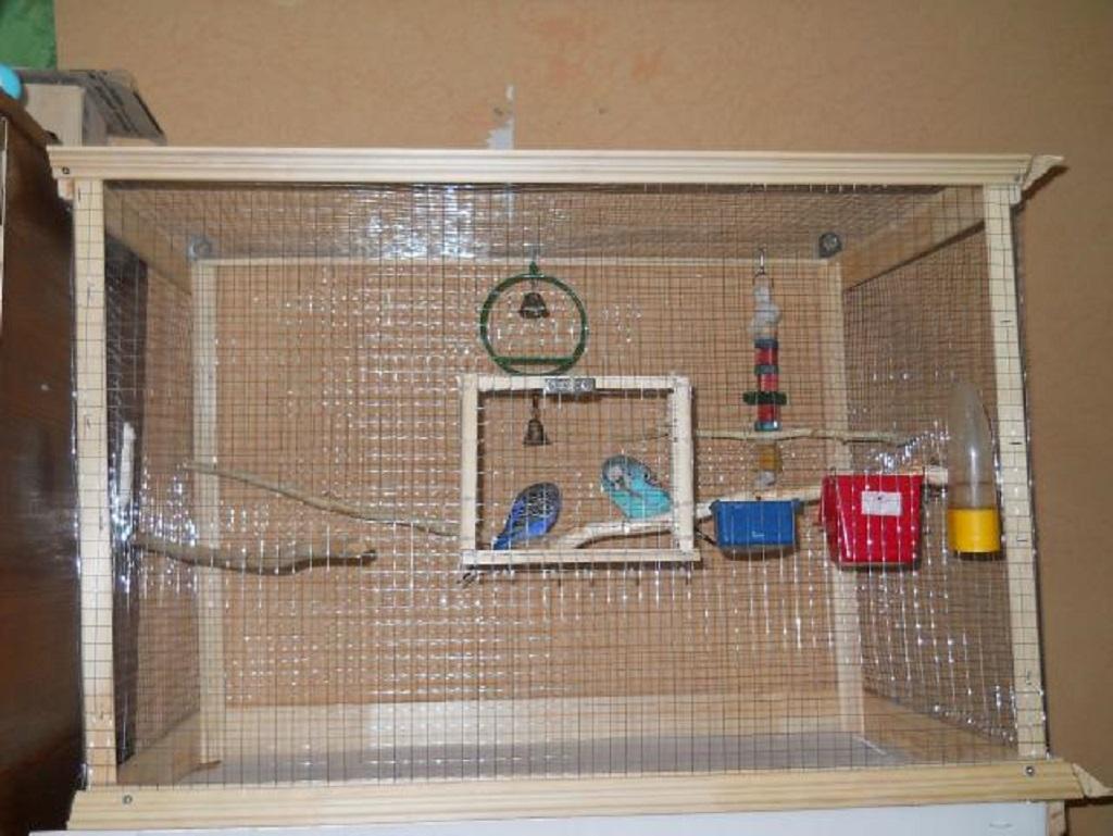 Хорошо будет создать для птицы не только комфортный дом, но и разнообразить ее жизнь в клетке