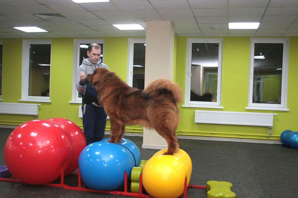 Упражнения для собак