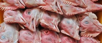 Можно ли давать собакам куриные головы