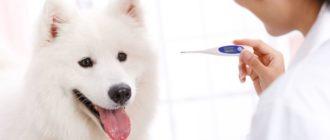 Какая температура у собак считается нормальной
