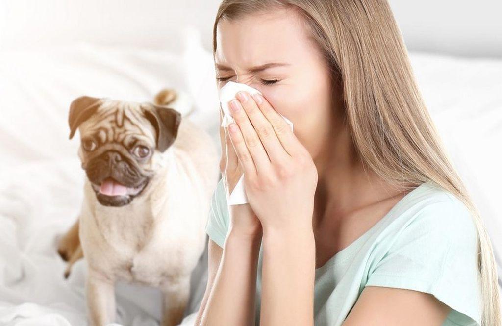 Аллергией на животных страдают 15% населения планеты