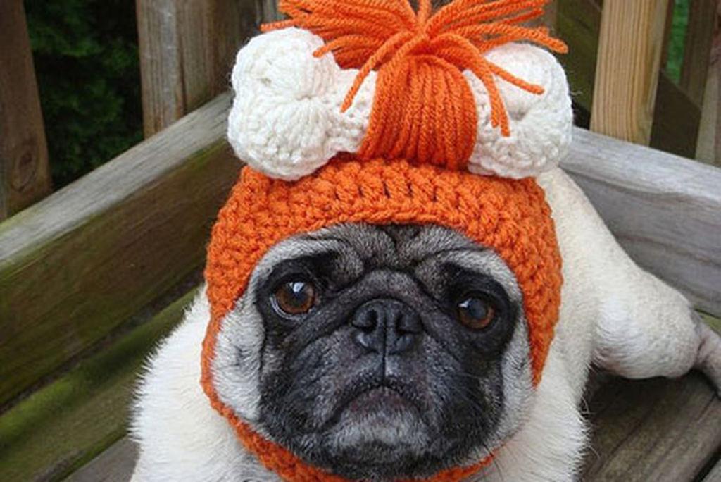 Самый простой способ связать шапку для собаки своими руками