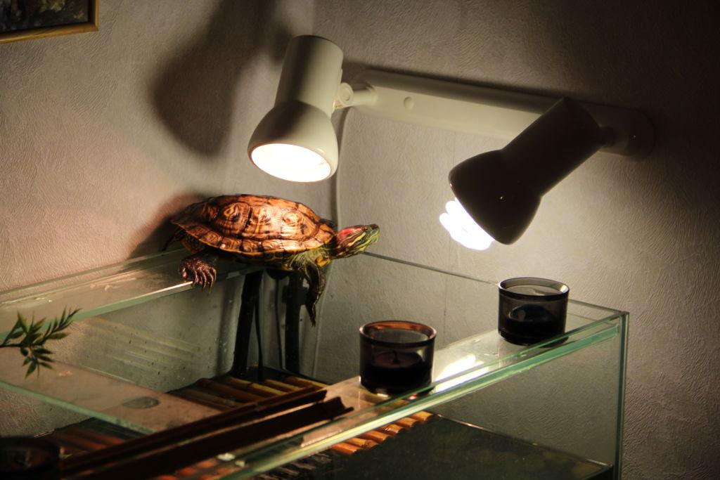 Островок для красноухой черепахи — как сделать своими руками